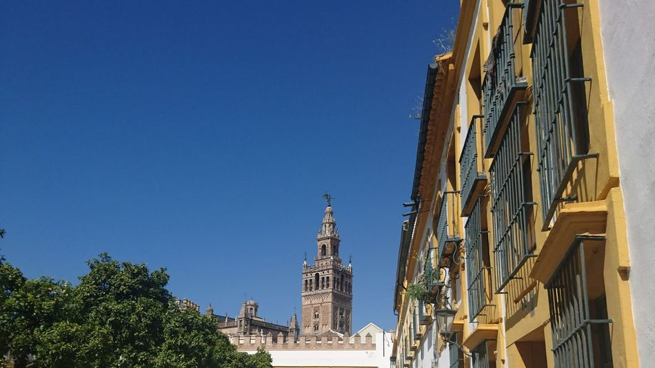 Sevilla Giralda Giralda La Ciudad Mas Bonita Del Mundo Crisbercris Sevilla Sevilla Spain Tree Blue Architecture City Travel Destinations Clear Sky Religion Outdoors Sky No People Cityscape Day
