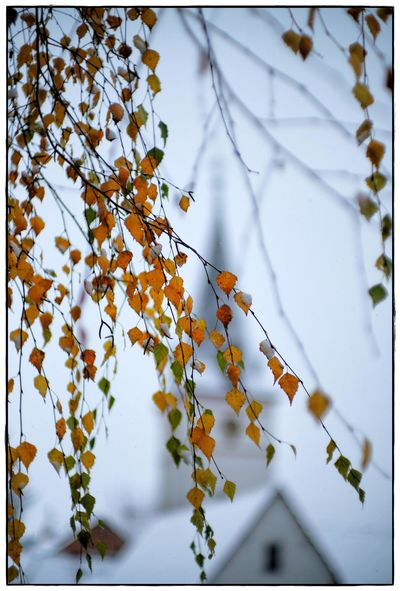 the church Church Beauty In Nature Close-up Day Focus On Foreground Lawoe Nature No People Snow Tree Winter