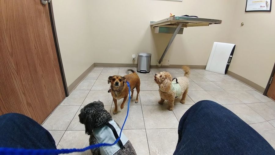 """""""We can hardly wait to see our Veterinary Dr."""" Clinic Vet Clinic Leash Leash And Collar Room Vet Table Veterinary Veterinary Hospital Veterinary Clinic Dogs Vet  Veterinarian Dog Vet Hospital Indoors  Chair Day Pets"""