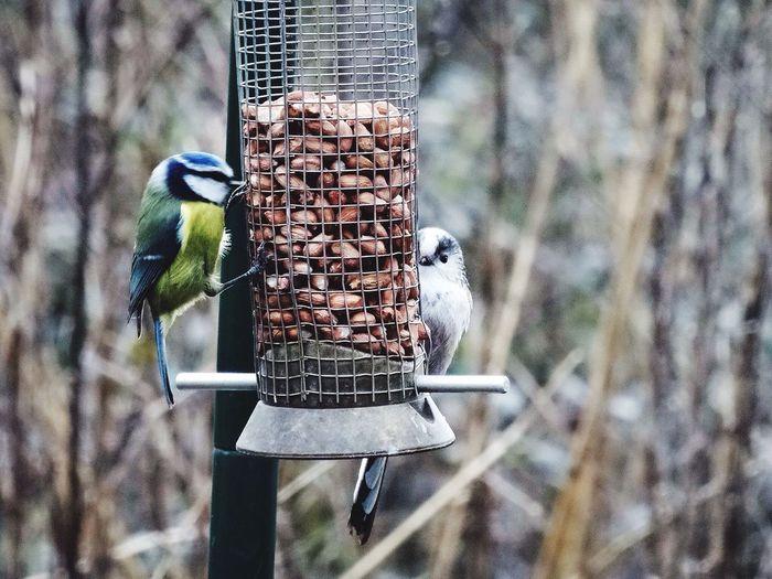 Birds perching on metallic feeder