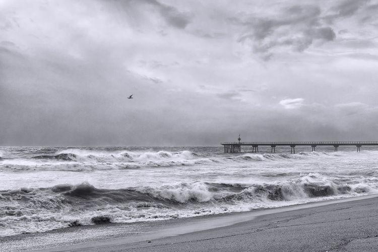Mar bravío #tormenta #storm #dark Clouds#rain #sunset #storm Vs Sun #clouds  Badalona #gaviotas #pontdelpetroli #catalunyaexperience #nit #light #badalona #barcelona #elmeupetit_pais #relax #descubreixcatalunya #petitparadis #mediterraneansea #mediterraneanbeach #beachlover Water Sea Wave Beach Sand Storm Cloud Sky Horizon Over Water Flock Of Birds Sea Bird