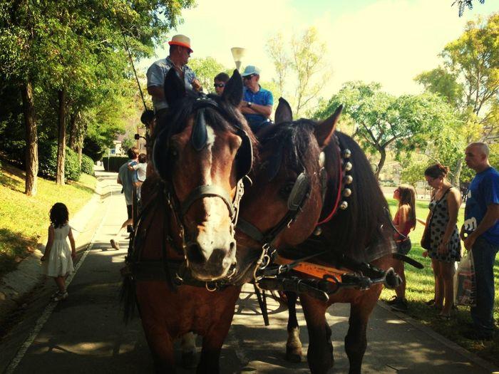 Horses Tartana