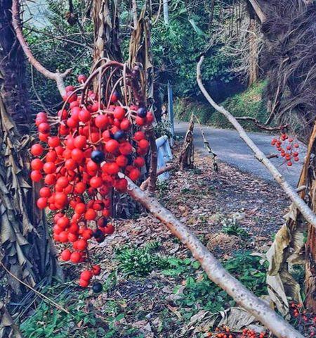 Turkey Karadeniz Artvin Arhavi Gürcistan Batum Gürcü Batumi Batumi Botanic Garden Photo Eyyem 😍😌😊