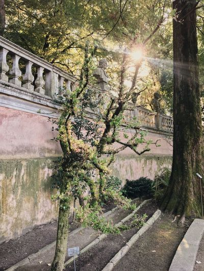 Orto Botanico Di Padova Padua Venice, Italy Plant Architecture Tree Built Structure Nature Sunlight Growth Sunbeam No People Building Exterior Day Beauty In Nature Outdoors Wall Sunny Building Sky Lens Flare Sun Branch