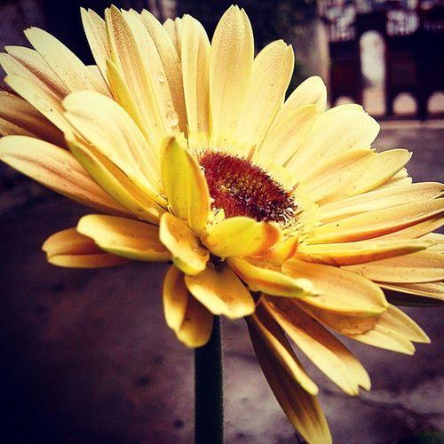 Flower Yellow Naturelover Naturesgift Samsunggalaxycore