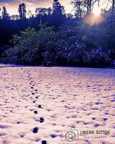 Footsteps Footsteps Footprints Snow Snowing Snowday Christmas Winter Winter2015 Snowy Cookstown Northernireland PureNorthernIreland Discovernorthernireland Drummanorforestpark Nationaltrust Nationaltrustni Walk Walking Park ForestPark Sky Cold Frozen Winterwonderland Photoshop picoftheday