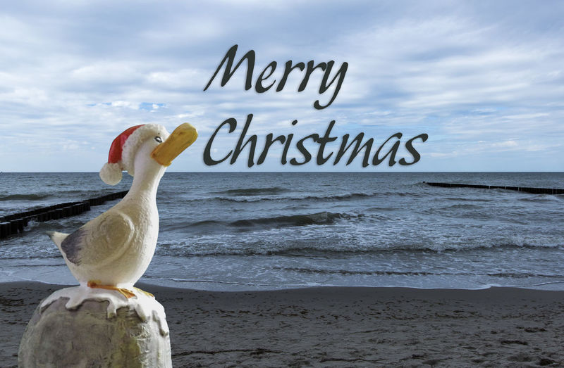 Bird Outdoors Beach Nature Cloud - Sky No People Text Christmastime Christmas Spirit Greetings! Greetings To Friends