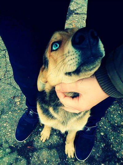 Half Husky ♡ Beauty Love ♥