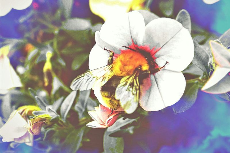 EyeEm Nature Lover EyEmNature Nature_collection Landscape_collection EyeEmNatureLover EyeEmNatureLover#flower#Nature_collection Eyem Gallery OpenEdit Bees And Flowers EyeEm Enjoying Life Nature