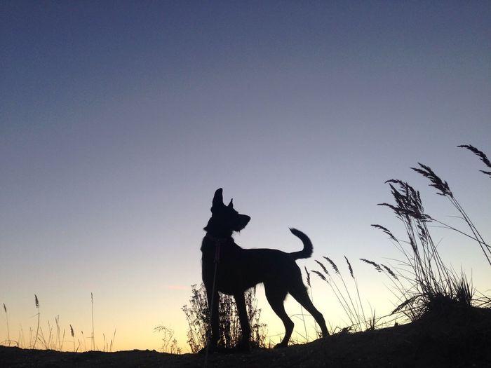 Dog Sky Taking Photos Black Blue