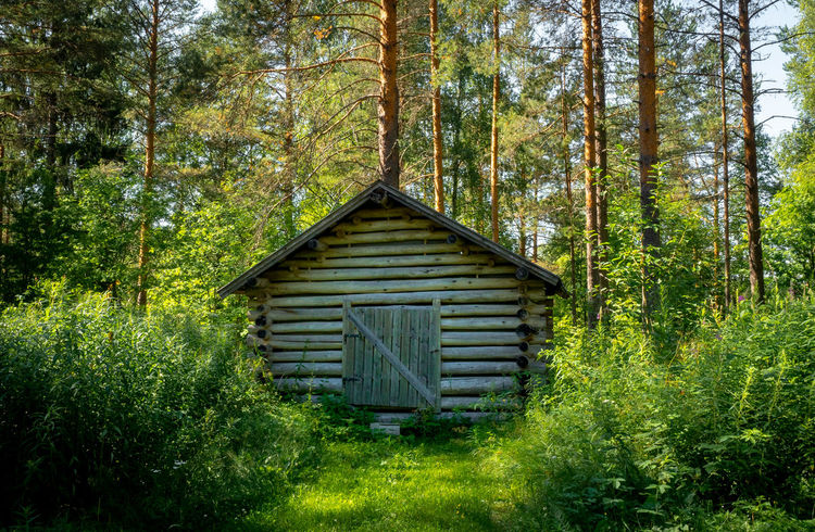 Finland Juankoski Beauty In Nature Day Finnland Forest Green Color House Nature No People Non-urban Scene Outdoors Wood - Material WoodLand