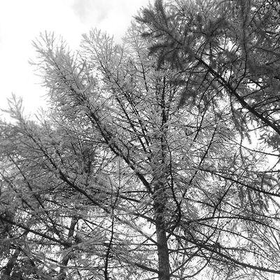 Classic Vintage Lomography Lomo винтаж ломо Instapic Black White Grey Monochromes Monochrome Monochromephoto MonochromePhotography Instalike фотоаппарат Blacknwhite Blackandwhite Blackwhitephotography Blackwhitephoto Bnw Bw чернобелое чернобелаяфотография чернобелая autumnoctober