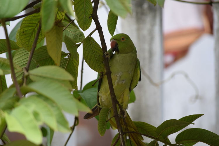 Animal Wildlife One Animal Insect Leaf Animals In The Wild Animal Themes No People Green Color Close-up Day Outdoors Nature Perching Reptile Branch Tree