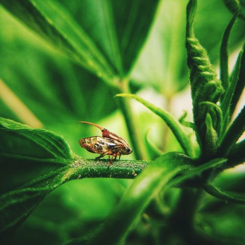 Macro Macro Photography Nature Eyeem Philippines Nature_collection Nature Photography EyeEm EyeEm Gallery EyeEm Best Shots EyeEm Nature Lover Cricket Insect Leaf Insect Close-up Plant Green Color Animal Leg Arachnid