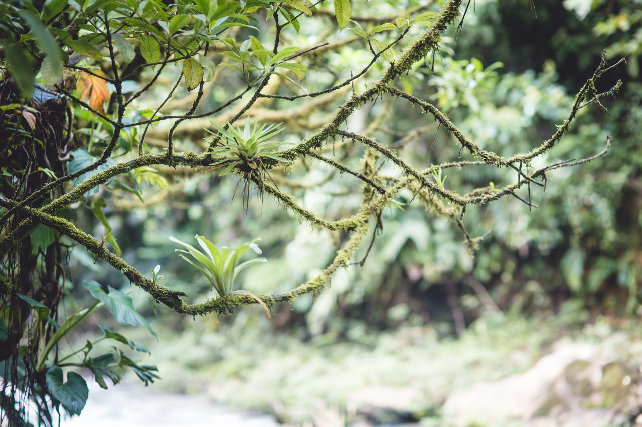 Mossy Branch With Green Flowers