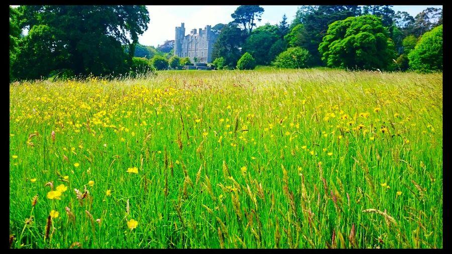 Summer ireland castlewellan yellow flowers castle
