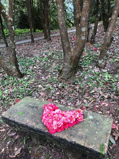 Pink Color Flower Nature Heart Shape No People Tree Outdoors Tree Trunk Beauty In Nature Rose - Flower Tranquility Love Day Leaf Fragility Red Petal Plant Growth Flower Head