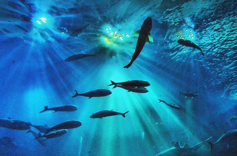 Into the blue Fish Water Sea Life Underwater Nature Aquarium