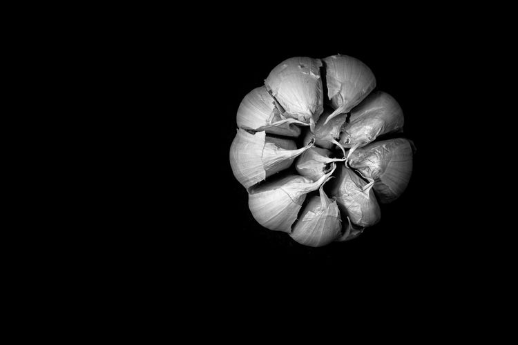 High angle view of pumpkin on black background