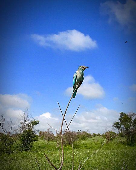 Bird Sky One