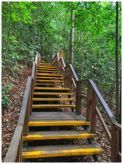 Staircase leading towards forest