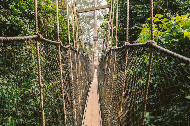 View of rope bridge in forest