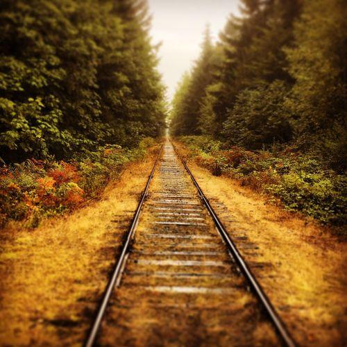 Transportation Tree Surface Level Railway Track The Way Forward Diminishing Perspective Selective Focus Railroad Track Rail Transportation Long Vanishing Point Landscape Train Track