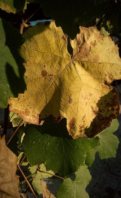 Leaf Autumn Autumn Colors Autumn🍁🍁🍁 осенние листья желтый Коричневый зеленый
