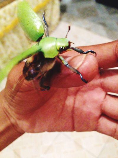 Bug Human Hand