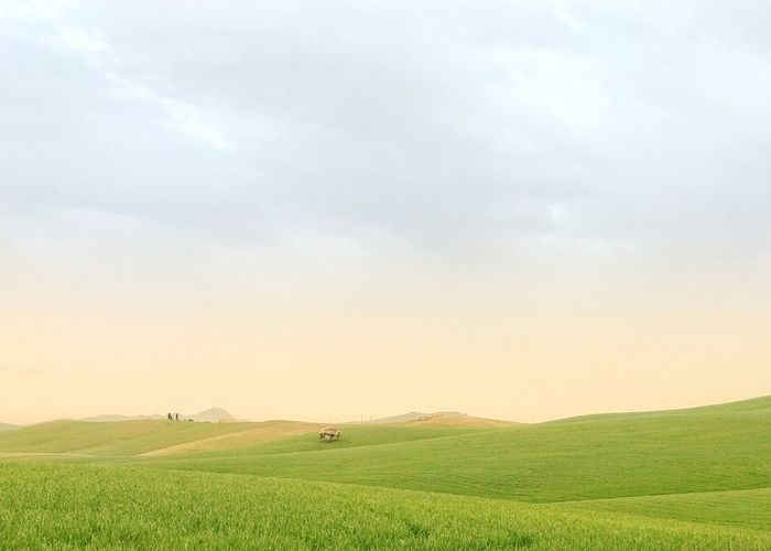Entroterra Siciliano Green Sun Nature Field Agriculture Nature Beauty In Nature Landscape Sky Cloud - Sky Tranquility Scenics Rural Scene Tranquil Scene Growth Outdoors Grass No People Day Agriculture Land Environment Nature