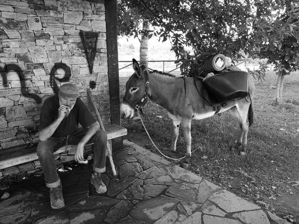 Camino CaminodeSantiago Donkey HuaweiP9 Monochrome Monochrome Photography Oo People Pilgrim Travel