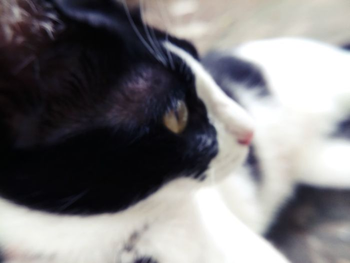 Animal Animal Body Part Animal Eye Animal Nose Animal Themes Black Color Cat Close-up Domestic Domestic Animals Domestic Cat Eye One Animal Pets Relaxation Selective Focus