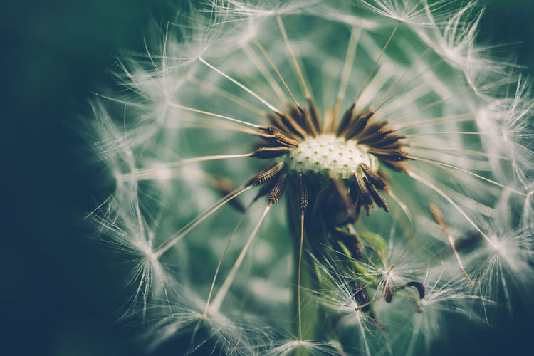 Beauty In Nature Botany Close-up Dandelion Day Detail Flower Flower Head Focus On Foreground Fragility Growth Natural Pattern Nature No People Outdoors Plant Selective Focus Sky Softness Stem Tranquility Uncultivated Market Reviewers' Top Picks