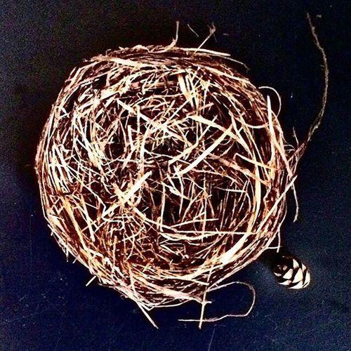 Birdsnest Nature Modern Rustic Design Naturedesign Simplicity Simple Simplify Naturetexture Texture Nest Craftsmanship  Architecture