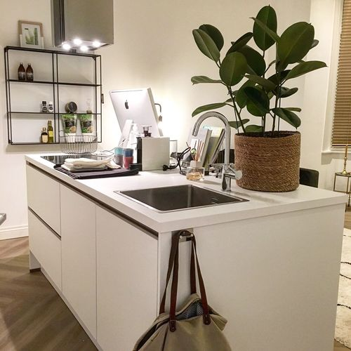 Plant Indoors  Home Home Interior Domestic Room Kitchen No People Table Domestic Kitchen Household Equipment Nature Domestic Life Day Appliance Kitchen Counter Furniture Sink Lighting Equipment Potted Plant Vase