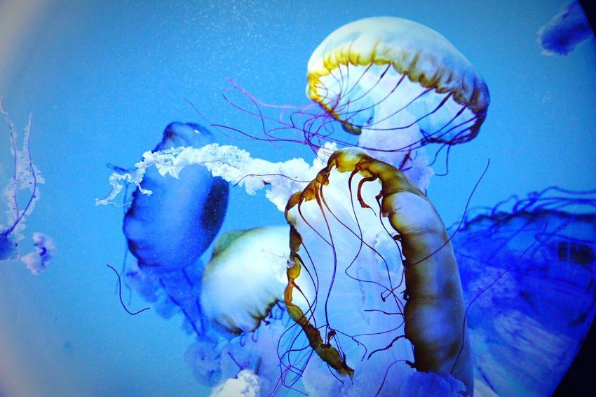 Animal In Water Underwater Animal Themes Swimming Sea Life Close-up Water Jellyfish Indoors  Aquarium No People Photography EyeEm Gallery