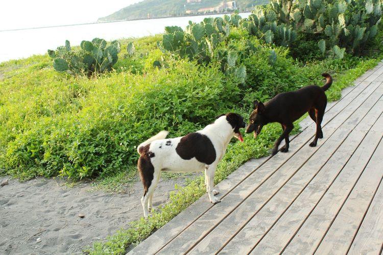Beauty In Nature Nature Outdoors Dog Taiwan Kaohsiung Qijin