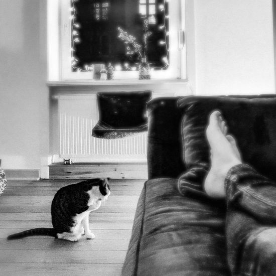 Cat Cleaning Self Snapseed Black And White Cat♡ Cat Lovers Cats Of EyeEm Cat Pets Low Section Sitting Domestic Cat Home Interior Window