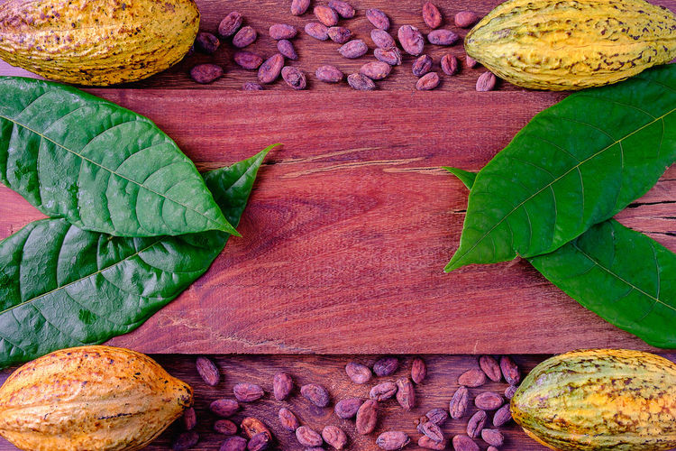 fresh cocoa and cocoa beans on a wooden background. Beans Chocolate Natural Nature Plant Raw View Views Background Butter Cacao Cocoa Food And Drink Fresh Fruit Healthy Eating Leaf Nature Organic Pod Ripe Tropical Vegetable Wooden Yellow