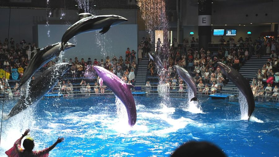Water Crowd People Fun Audience Dolphins DolphinShow Dolphin Jumping イルカショー イルカ Taking Pictures Taking Photos Capture The Moment Animal Photography Animal Themes Animals Jumping Jumping High Beautiful