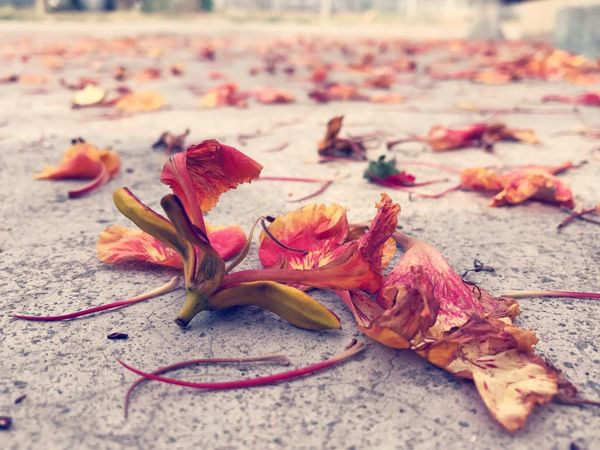 EyeEm Selects Autumn Fragility Nature