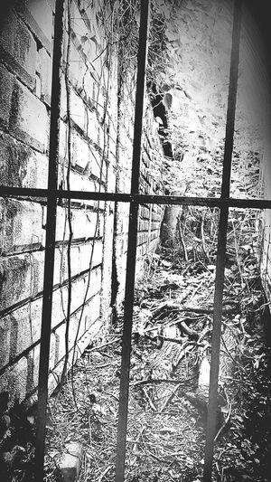 Crackland Heroin Alley Back Alleys Inmyhood Barren Urban Landscape The Ghetto Blackandwhite Photography