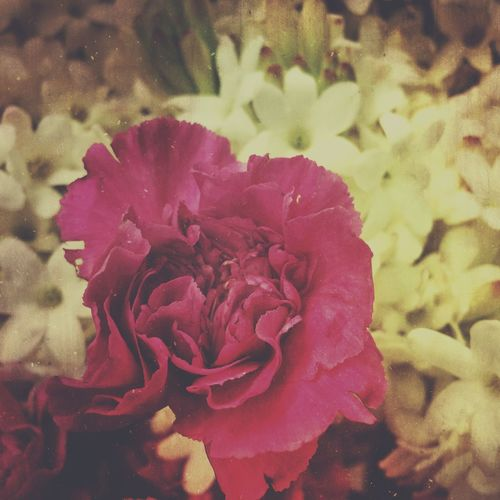 Day 130 Project 365 The Week On EyeEm Flowers Flower Flowers,Plants & Garden Flower Weekend Flower Collection Flowerporn Iphoneonly EyeEm Nature Lover
