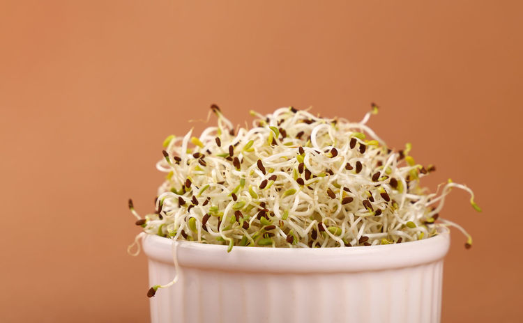 Fresh vegetarian and healthy mung bean microgreen over brown background, close up Brown Close-up Cuisine Food Food And Drink Freshness Green Color Health Healthy Eating Healthy Food Healthy Lifestyle Ingredient Micro Micro Nature Microgreens Mung Mung Bean Ready-to-eat Spring Springtime Studio Shot Vegan Vegetarian Vegetarian Food Visual Feast