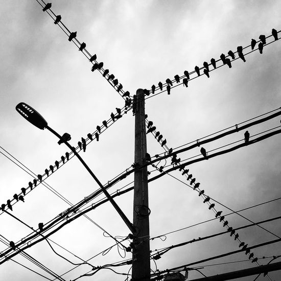 Birds on Wires Birds Of EyeEm  EyeEm Best Shots NYC Bird Birds Blackandwhite Cable Cloud - Sky Day Electricity  Eye4photography  Flock Of Birds IPhone IPhoneography Large Group Of Animals Low Angle View Mobilephotography No People Perching Power Line  Power Supply Sky Square Format Wire