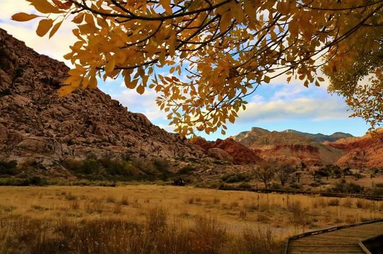 Landscape Mountain Nature Outdoors Tree Scenics Sky Autumn Yellow Redrock Lasvegas