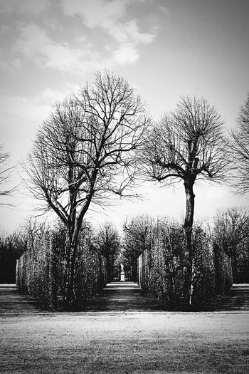 Statue. Tree Sky No People Castle Park Castle Vienna, Austria Statue Wien Cloud - Sky Outdoors Schloß Schönbrunn Schönbrunn Landscape Landscape_Collection Black & White Black And White Black And White Photography Beauty In Nature Beautiful March 2017 The Week Of Eyeem Personal Perspective Black And White Friday Axis Silouette And Shadows