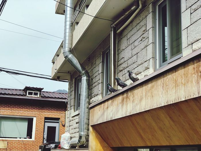 pigeon IPhoneography Pigeon Architecture Built Structure Building Exterior Low Angle View No People Day Outdoors
