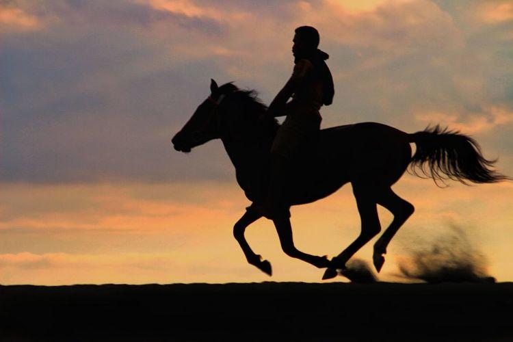Silhouette man riding horse