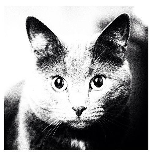 Был замечен с кроликами Cat Instacat Catofftheday Monochrome eyes view